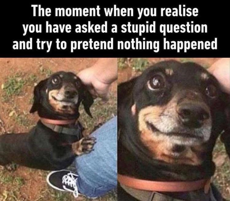 Dog - The moment when you realise you have asked a stupid question and try to pretend nothing happened