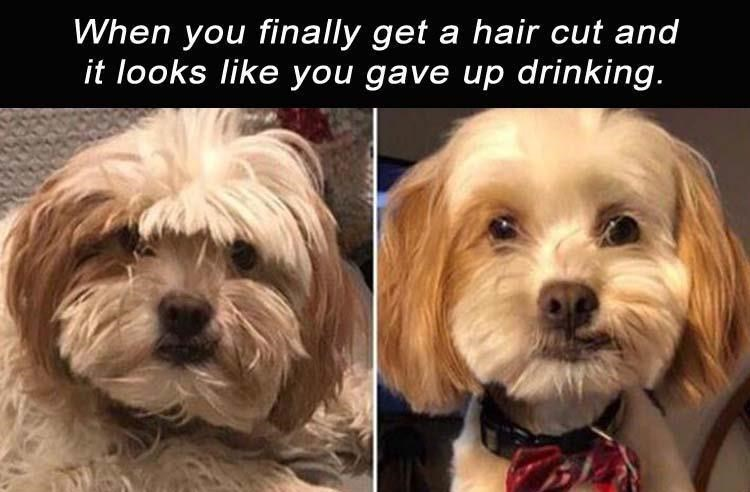 Dog - When you finally get a hair cut and it looks like you gave up drinking.