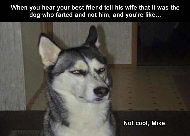 Mammal - When you hear your best friend tell his wife that it was the dog who farted and not him, and you're like... Not cool, Mike.