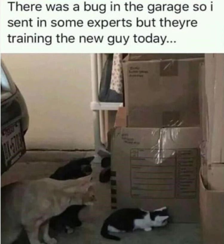 meme about training the new guy with pic of two cats watching a smaller cat peek between boxes