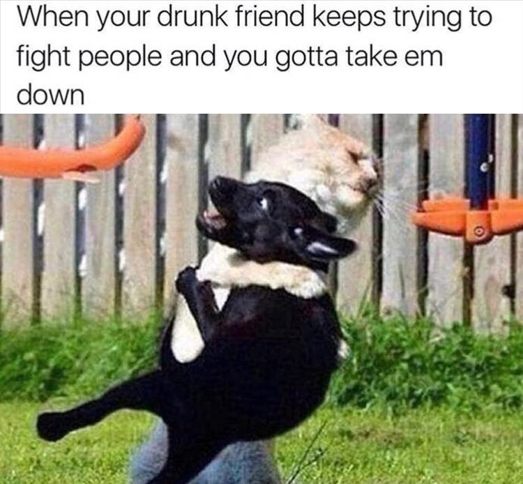 meme about holding back your drunk friend with pic of cat clotheslining a dog