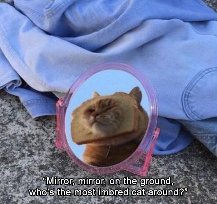 pic of cat with bread on its head reflecting in a mirror and the line from Snow White about the magic mirror
