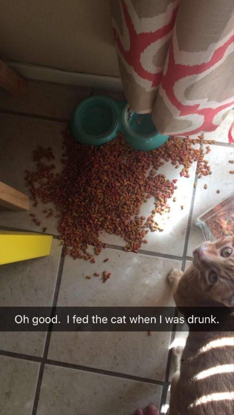 caturday meme about feeding your cat while drunk with pic of empty plate surrounded by cat food