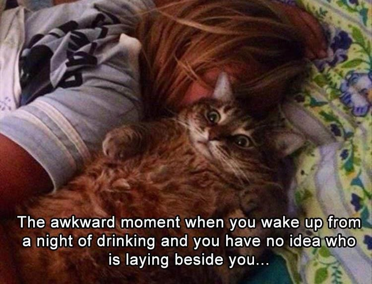 caturday meme about waking up after a night out with pic of horrified cat laying in bed next to a sleeping woman