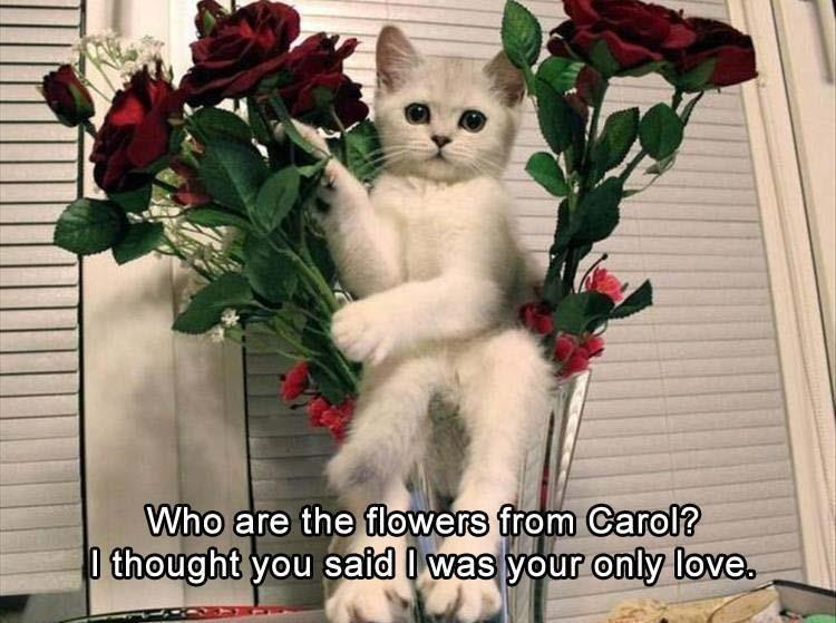 pic of white cat sitting between roses and thinking its getting cheated on