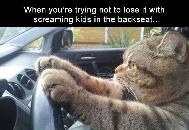 caturday meme about being a parent with pic of cat trying to stay calm while driving