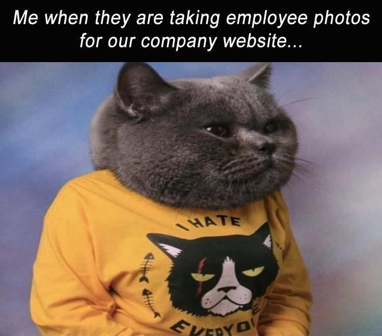"""caturday meme about taking photos with portrait of mean looking posing cat in a """"I hate everybody"""" shirt"""