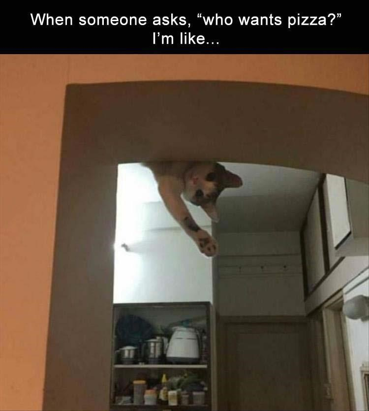 caturday meme about wanting pizza with pic of cat peeking from the ceiling