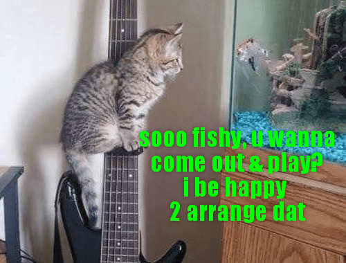 Beware of fish-friendly felinez