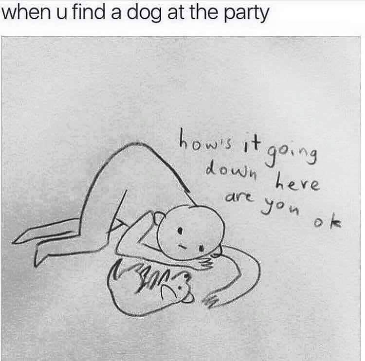 wholesome meme about getting excited when you find a dog at a party