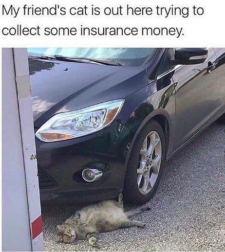 Funny meme about cat trying to collect life insurance.