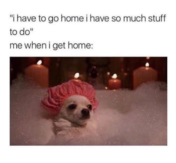 "Dog breed - ""i have to go home i have so much stuff to do"" me when i get home:"