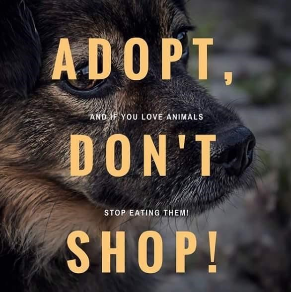 Text - ADOPT, ANDYOU LOVE ANIMALS DON'T STOP EATING THEM! SHOP!
