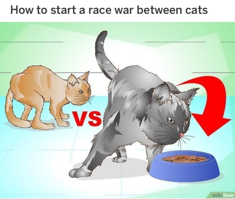 wikihow meme - Cartoon - How to start a race war between cats VS wiki How