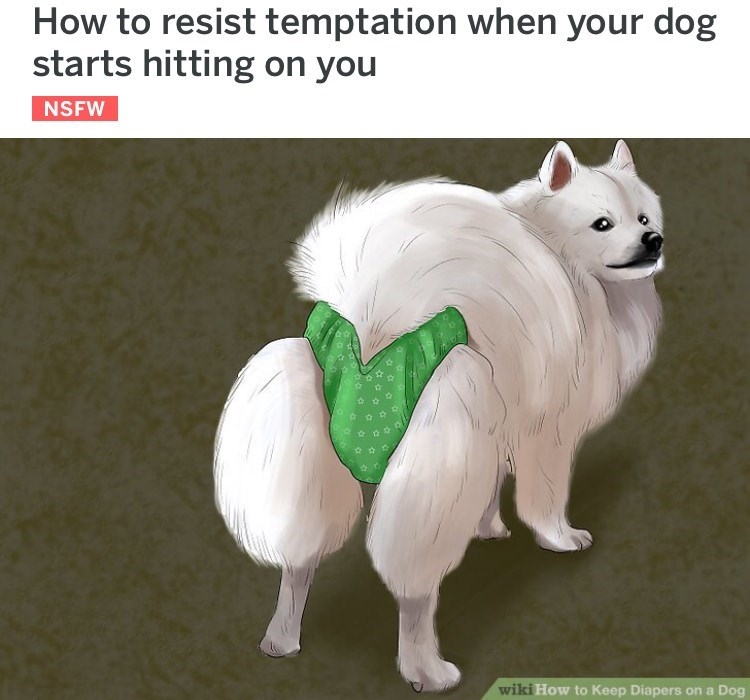 wikihow meme - Mammal - How to resist temptation when your dog starts hitting on you NSFW wiki How to Keep Diapers on a Dog