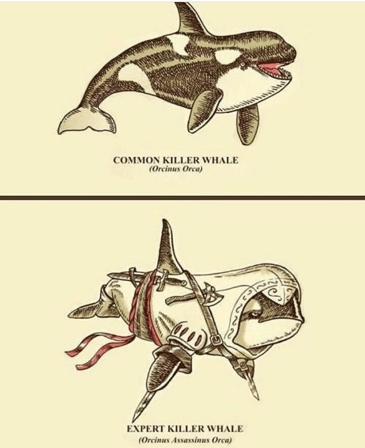 Bottlenose dolphin - COMMON KILLER WHALE (Orcinus Orca) EXPERT KILLER WHALE (Orcinus Assassinus Orca)