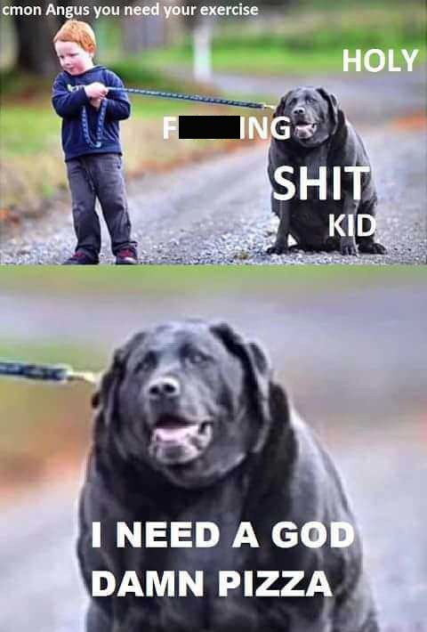 Pic of a very fat dog being walked by a small child