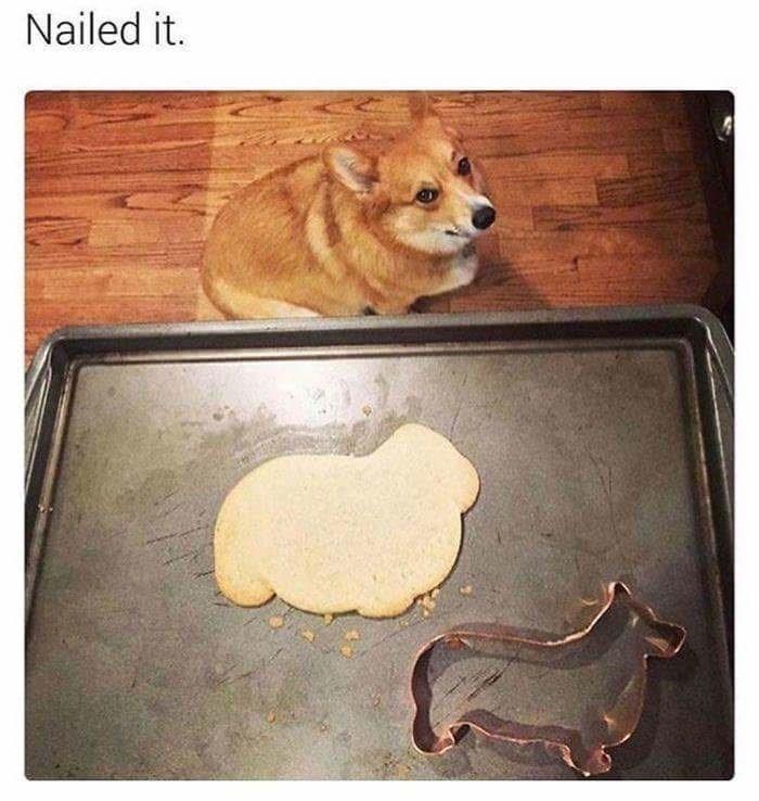 Dog - Nailed it.