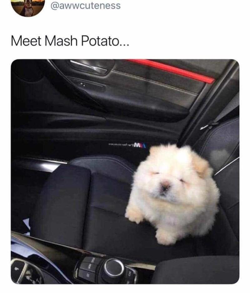 Dog - @awwcuteness Meet Mash Potato... O