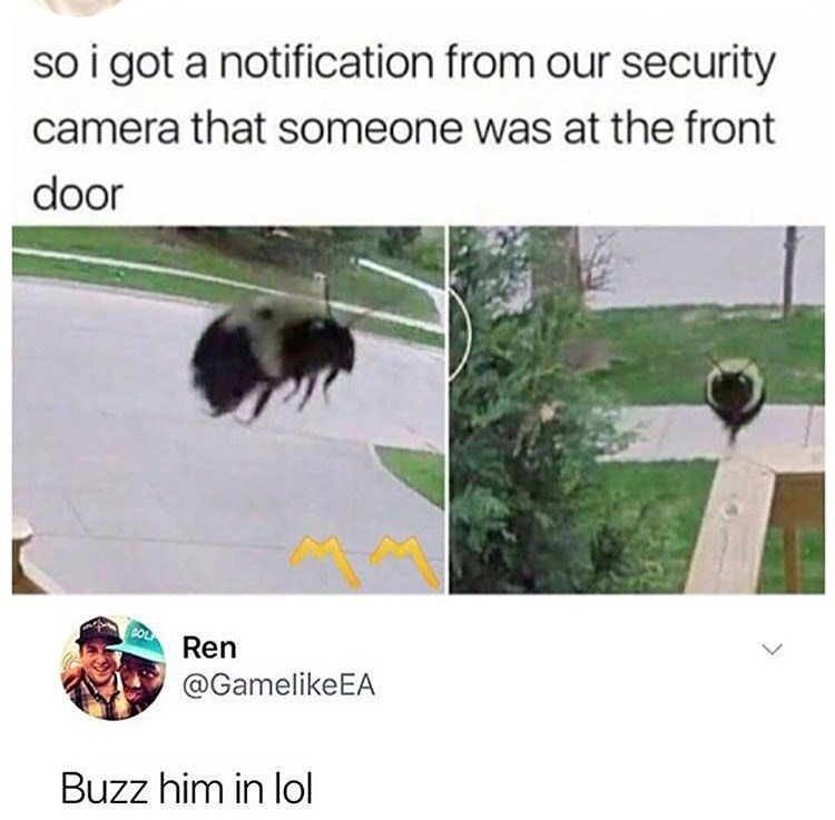 Adaptation - so i got a notification from our security camera that someone was at the front door Ren @GamelikeEA Buzz him in lol