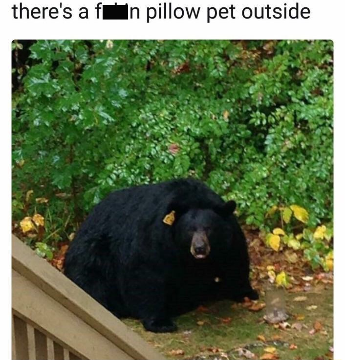 Bear - there's a f n pillow pet outside