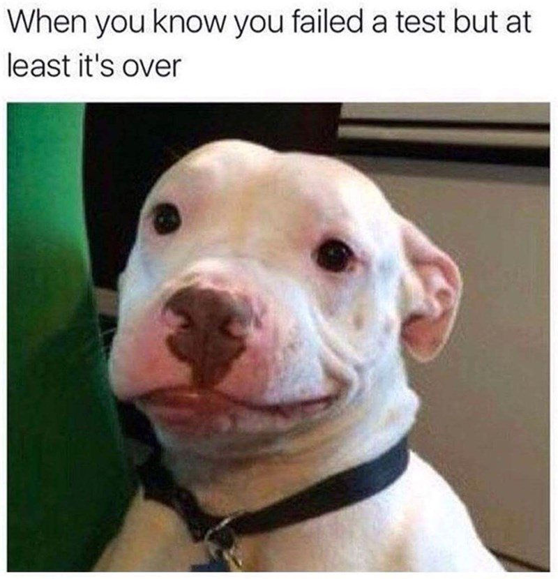 Dog - When you know you failed a test but at least it's over