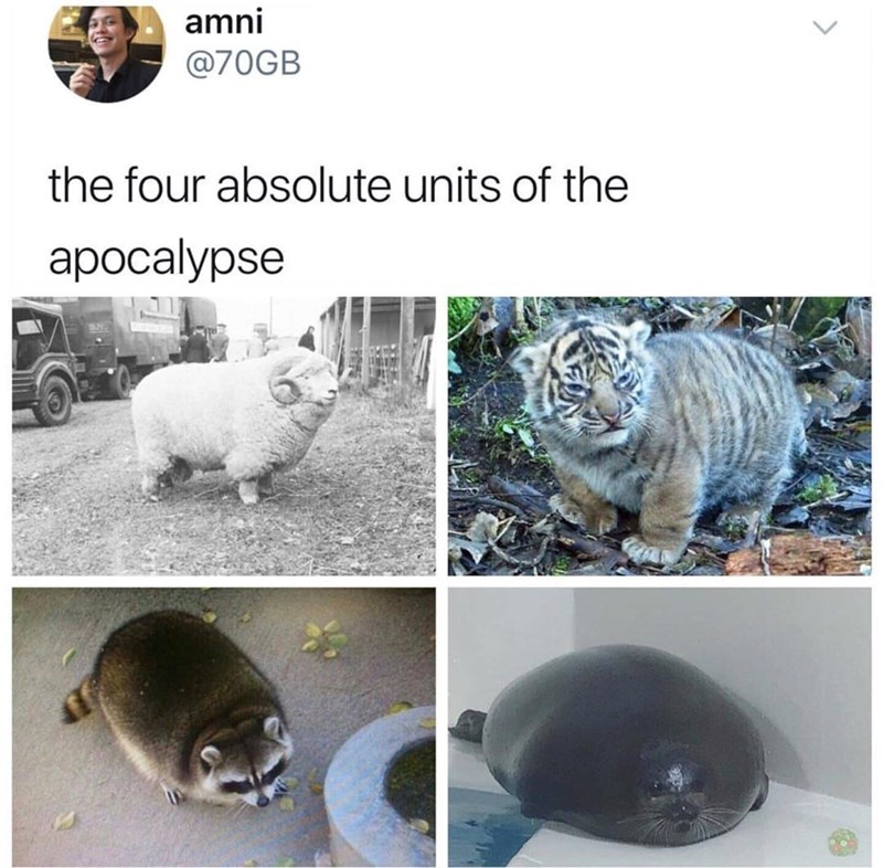 Adaptation - amni @70GB the four absolute units of the aроcalypse
