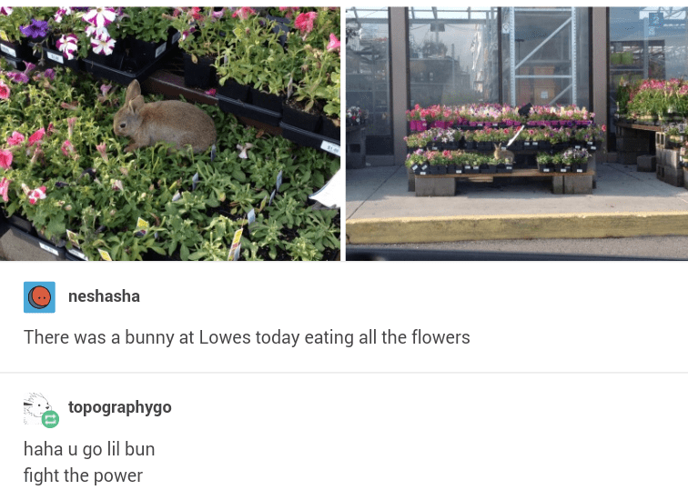 Product - neshasha There was a bunny at Lowes today eating all the flowers topographygo haha u go lil bun fight the power