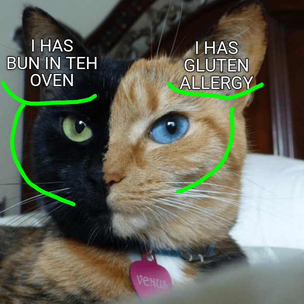 two face allergy Cats - 9203945728