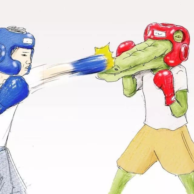 Drawing of a crocodile getting punched in the snout during a boxing match