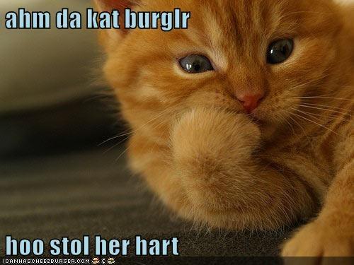 Cheezburger Image 9204187648