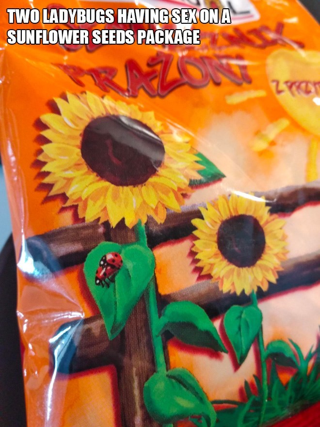 Sunflower - TWO LADYBUGS HAVING SEXON A SUNFLOWER SEEDS PACKAGE UNG