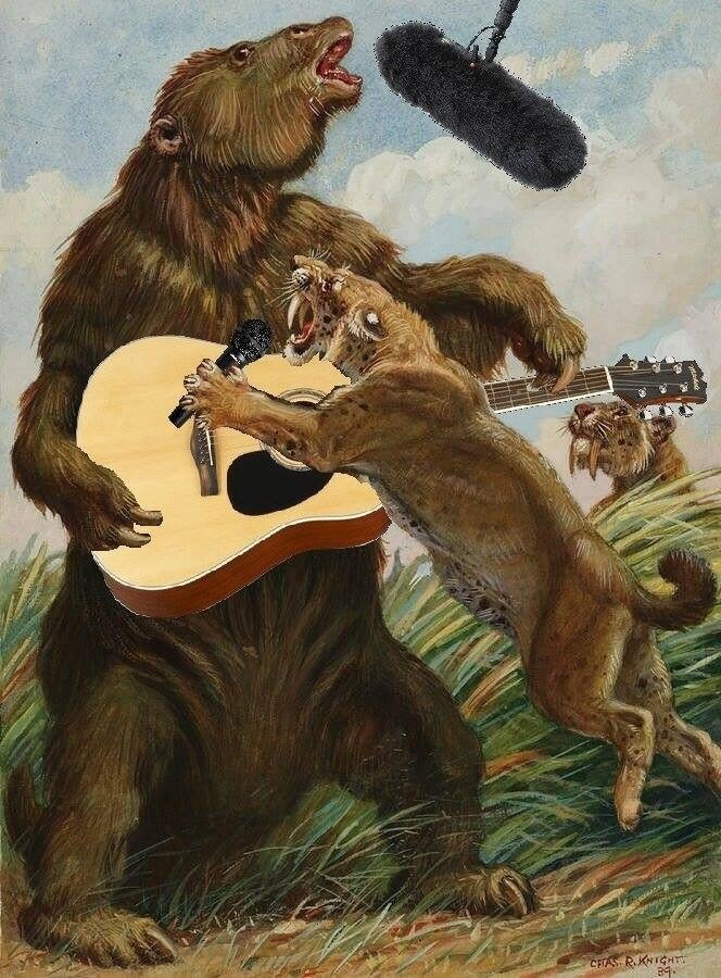 Grizzly bear - CFFAS RKNICHT
