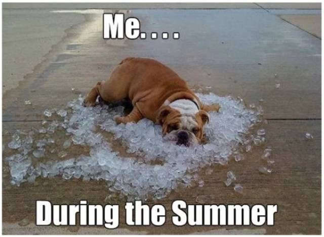 Dog - Me.... During the Summer