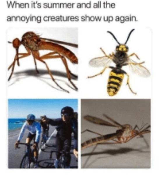 Insect - When it's summer and all the annoying creatures show up again.
