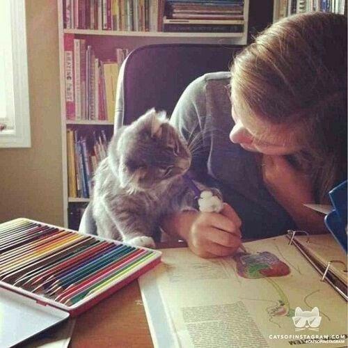 Cat - CATSOFINSTAGRAN.COMS waAhoTAGEAM EATING