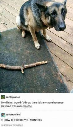 Dog - earthlynation I told him I wouldn't throw the stick anymore because playtime was over. Source tymorrowland THROW THE STICK YOU MONSTER Source: earthlynation