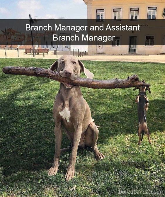 Dog - Branch Manager and Assistant Branch Manager boredpanda.com