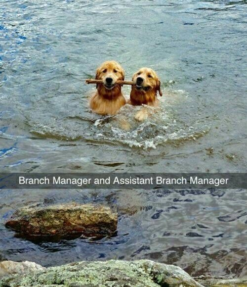 Vertebrate - Branch Manager and Assistant Branch-Manager