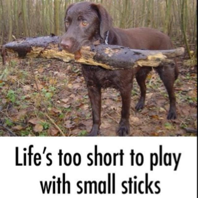 Dog - Life's too short to play with small sticks