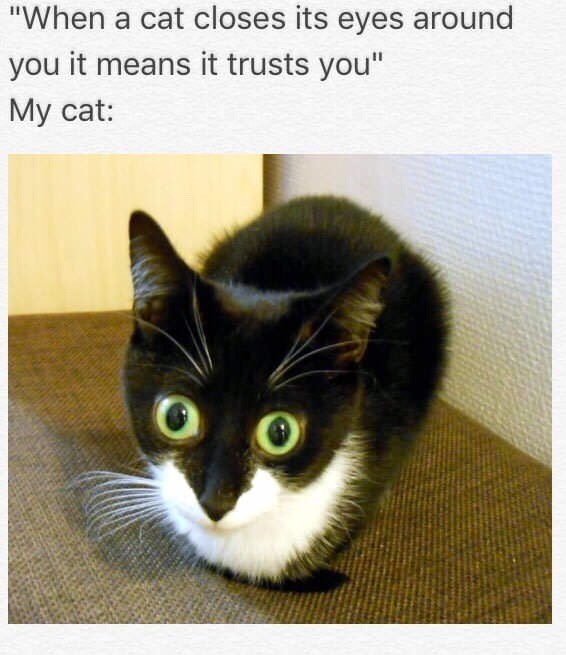 sunday meme of a cat with wide open eyes