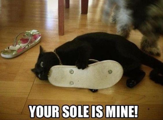 cat pun - Footwear - YOUR SOLE IS MINE!