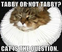 cat pun - Cat - TABBY OR NOT TABBY? CATAS THE QUESTION