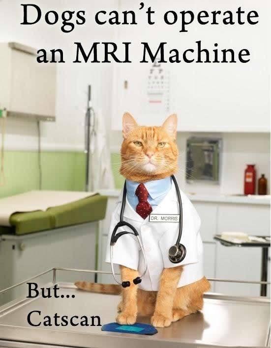 cat pun - Cat - Dogs can't operate an MRI Machine DR. MORRIS But... Catscan
