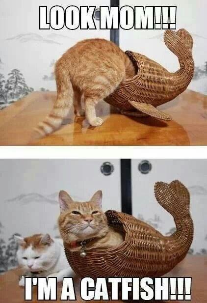 cat pun - Cat - LOOKMOM!!! IMA CATFISH!!!