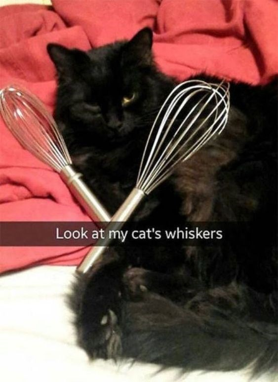 cat pun - Cat - Look at my cat's whiskers