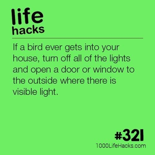 Text - life hacks If a bird ever gets into your house, turn off all of the lights and open a door or window to the outside where there is visible light. #321 1000LifeHacks.com