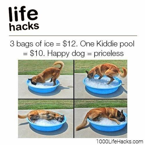 Companion dog - life hacks 3 bags of ice $12. One Kiddie pool =$10. Happy dog priceless 1000LifeHacks.com