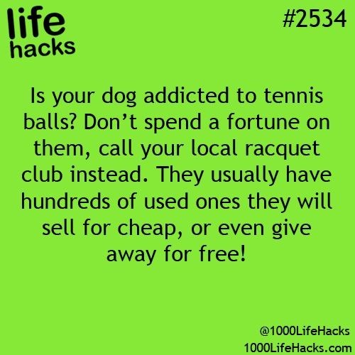 Text - life hacks #2534 Is your dog addicted to tennis balls? Don't spend a fortune on them, call your local racquet club instead. They usually have hundreds of used ones they will sell for cheap, or even give away for free! @1000LifeHacks 1000LifeHacks.com
