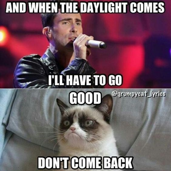 """cute cat grumpy not wanting the person to come back from Adam Levines song: """"Daylight"""""""